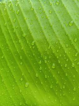 Primo piano di foglia di banana con sfondo verde