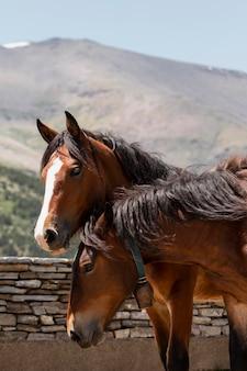 Primo piano su splendidi animali in campagna