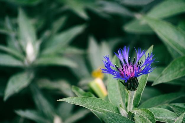 Primo piano su bellissimi dettagli di erba fiore