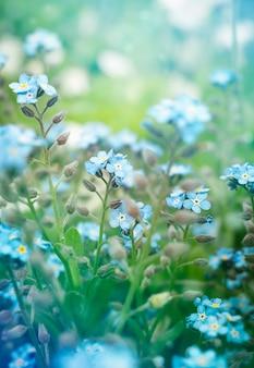 Primo piano di bellissimi fiori non ti scordar di me.