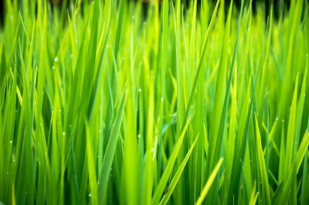Primo piano di bella erba verde con sfondo sfocato