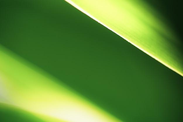 Close up bella foglia verde naturale e luce solare per lo sfondo e la consistenza. Foto Premium