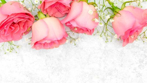 Primo piano di belle rose rosa