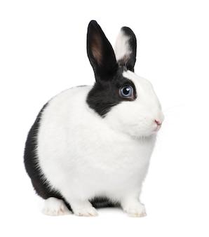 Primo piano sul bellissimo coniglio isolato