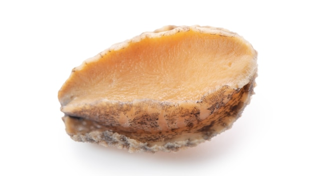 Primo piano di bellissimi frutti di mare crudi di abalone isolati su sfondo bianco, tracciato di ritaglio tagliato.
