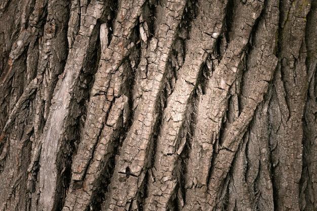 Primo piano sulla bellissima trama di corteccia d'albero