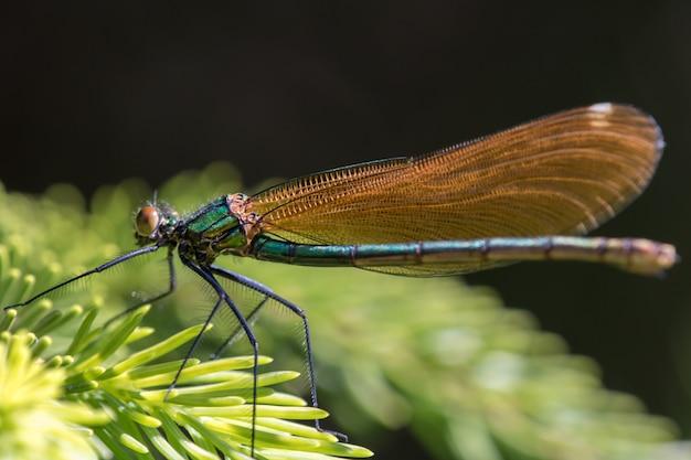 Chiuda in su di bella libellula in natura