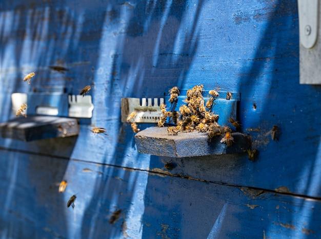 Primo piano di uno sciame di api su un alveare di legno in un apiario.