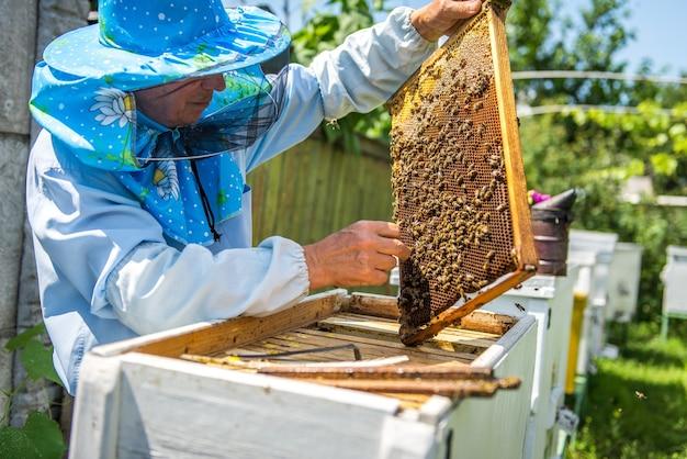 Primo piano di un apicoltore esplorando il favo all'aperto