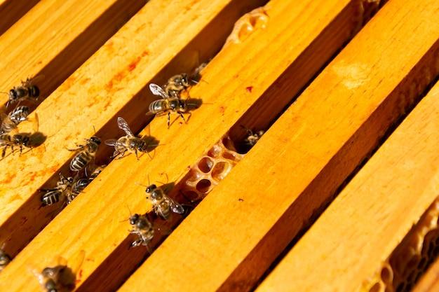 Chiudere le api in un pettine che produce miele
