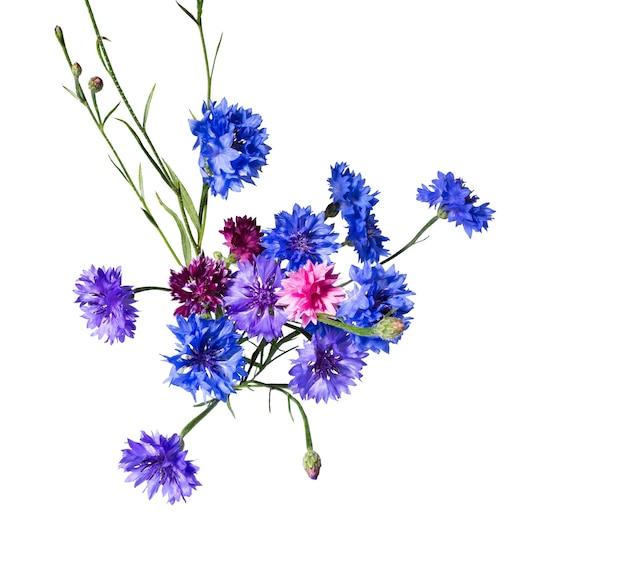 Primo piano di fiori di fiordaliso blu isolati su sfondo bianco. fiore blu dell'erba del fiordaliso o del bottone del celibe. foto macro di fiori di mais.