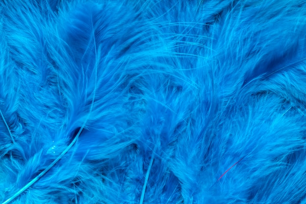 Primo piano delle piume blu