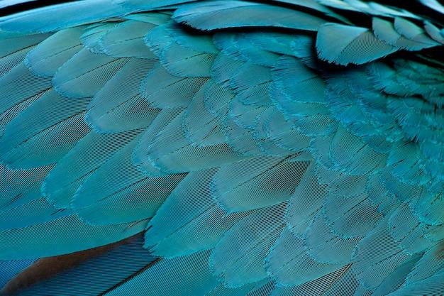 Primo piano delle piume dell'ara blu e gialla, ara ararauna
