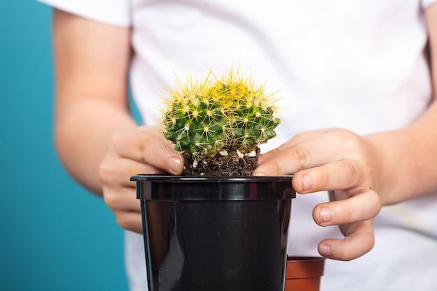 Primo piano del ragazzo pianta un cactus leggermente cresciuto in un vaso nero in modo che possa crescere più velocemente su un tavolo contro una superficie blu.