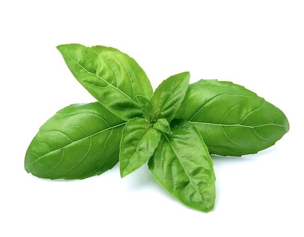 Primo piano sul mazzo di foglie di basilico isolato