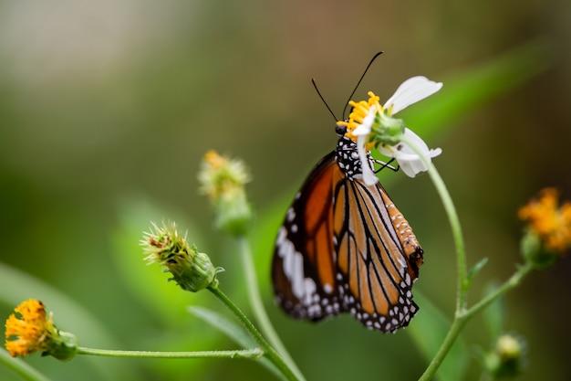 Farfalla del primo piano sul fiore, sulla priorità bassa verde della sfuocatura