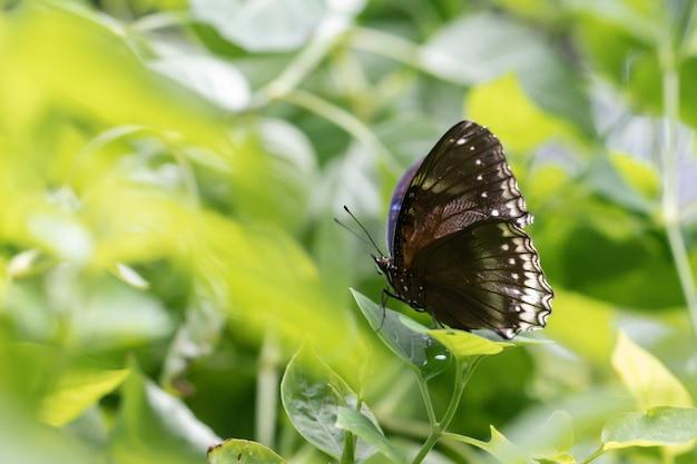 Primo piano farfalla sulla foglia verde in giardino.