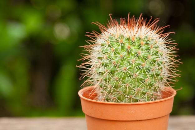 Chiuda sul deserto del cactus su legno, sfondo naturale.