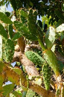 Primo piano di cactus in giardino in giornata di sole messa a fuoco selettiva