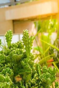 Chiuda sull'albero di cactus in giardino