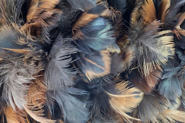 Struttura della piuma del pollo del primo piano per lo sfondo