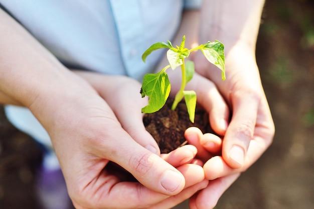 Primo piano delle mani di un bambino nelle mani di un adulto che tiene un germoglio o una piantina verde