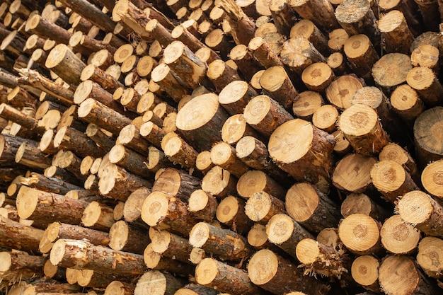 Primo piano del concetto di foresta di legno tagliato e impilato