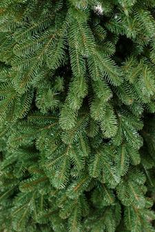 Albero di natale del primo piano senza giocattoli. buon anno nuovo spirito. i rami di un albero di natale verde si chiudono in su