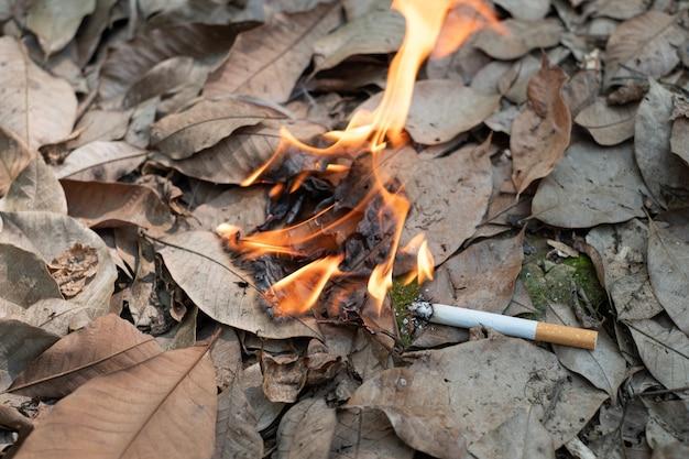 Il mozzicone di sigaretta da vicino non fumato con noncuranza viene gettato nell'erba secca
