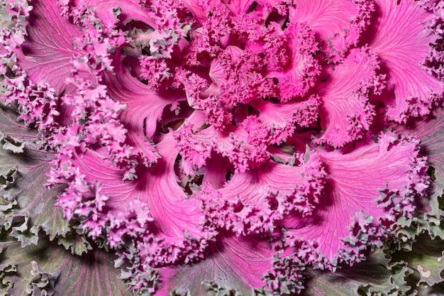 Primo piano della pianta colorata