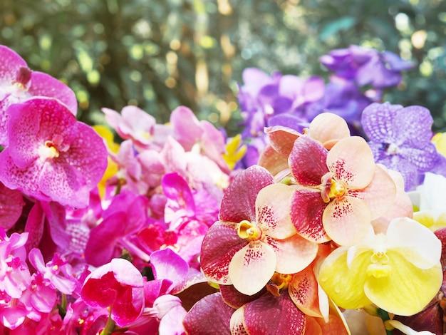 Chiuda sul mazzo variopinto del fiore dell'orchidea di vanda