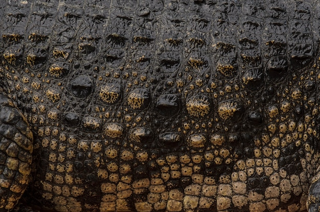 Primo piano della trama della pelle di coccodrillo