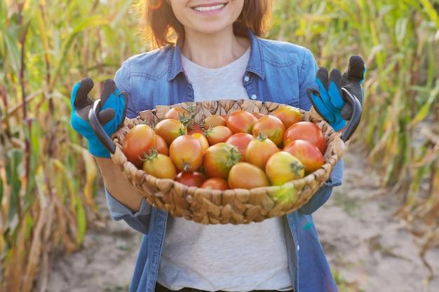 Primo piano raccolto di pomodori rossi organici di fattoria matura nel cesto nelle mani della donna, giardiniere femminile nell'orto. hobby, tempo libero, cibo sano e naturale, concetto di giardinaggio