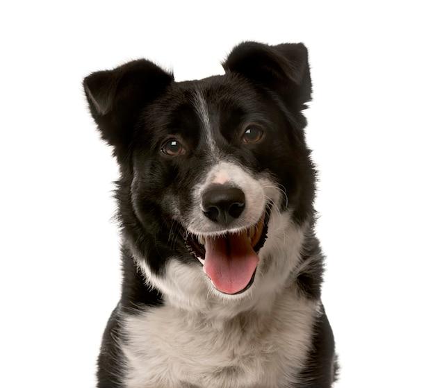 Primo piano di un cane dell'incrocio davanti a un muro bianco