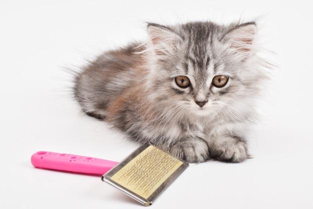 Primo piano di un simpatico gattino sdraiato accanto a un pettine su uno sfondo bianco. cura degli animali. un luogo da copiare. copia spazio