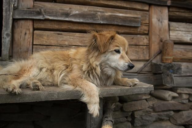 Close up carino vecchio cane sdraiato sulla panca in legno