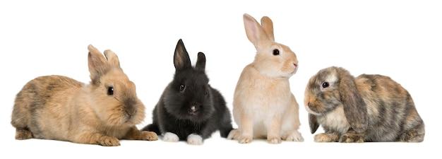 Primo piano su simpatici conigli isolati