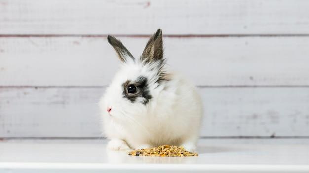 Il primo piano del coniglietto bianco sveglio sta mangiando il mix di cibo secco per roditori su fondo di legno. mangime bilanciato con cereali, semi, piselli, verdure essiccate. concetto di cibo equilibrato per roditori