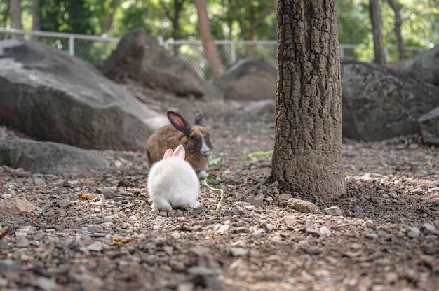 Close up cutie coniglio in wat pra putthabat phu kwai ngoen a chiang khan distretto loei thailand.chiang khan coniglio tempio o wat pra putthabat phu kwai ngoen