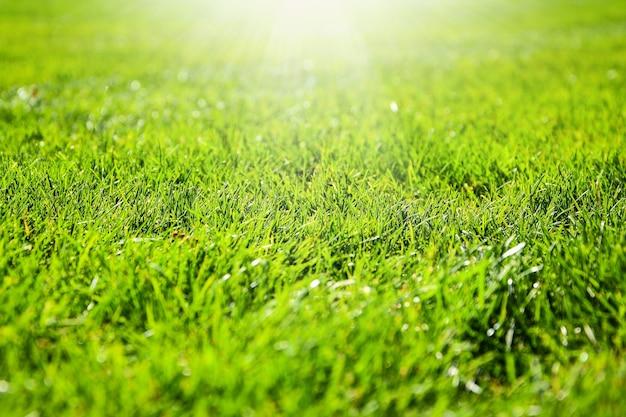 Primo piano dettaglio di un campo in erba verde illuminato da una bella luce soffusa. luce del sole. modello. copia spazio per il testo. trama di erba verde, sfondo verde dal campo di calcio del parco all'aperto. corso di golf