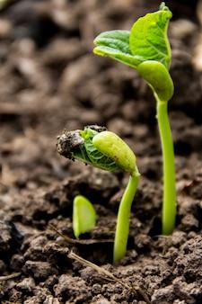 Dettaglio del primo piano dei semi che germinano in primavera e in autunno. concetto di germinazione