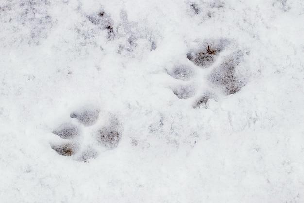 Primo piano sulle tracce di zampe di cane nella neve