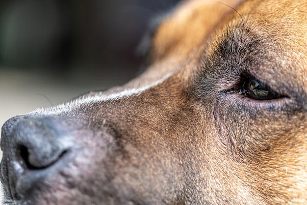 Primo piano del naso di un cane, parte di un ritratto di un labrador retriever.