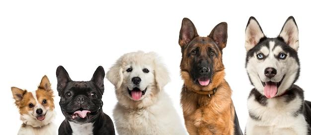 Primo piano sulla testa di cani davanti a uno sfondo bianco