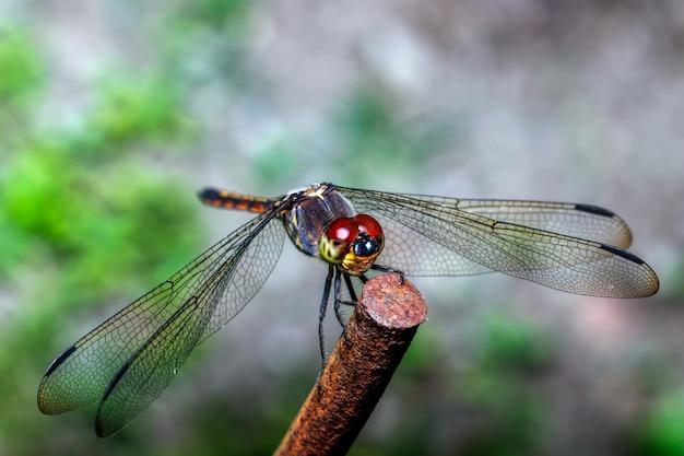 Primo piano della libellula sul ferro
