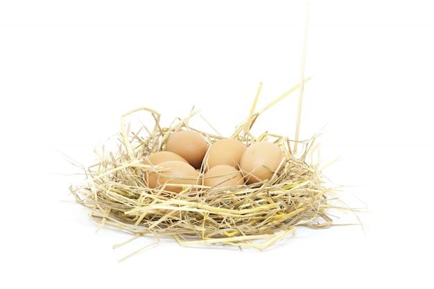 Lo studio isolato uova del primo piano ha sparato su fondo bianco