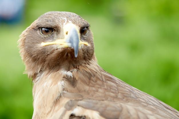 Vicino falco uccello