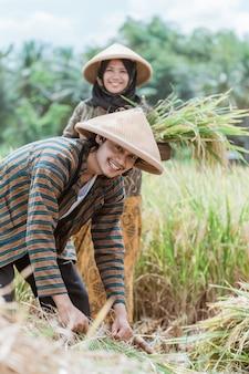 Primo piano di agricoltori che sorridono mentre legano le piante di riso e portano i raccolti nei campi