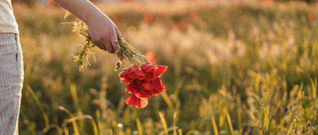 Primo piano di mani femminili che tengono un mazzo di papaveri rossi al tramonto nel campo