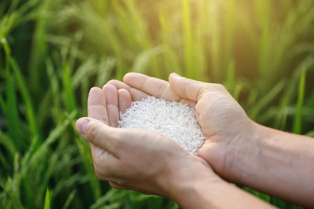 Primo piano delle mani femminili con riso bianco
